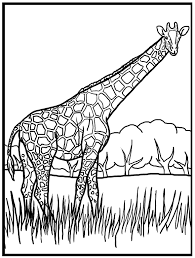 giraffe color coloring free coloring pages