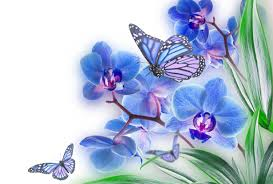 butterflies and flowers wallpapers wallpaper cave