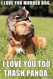 Murder Meme - murder dog and his friend trash panda meme on imgur