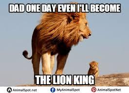 King Meme - lion king meme different types of funny animal memes pinterest