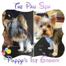 the paw spa napa u0027s house call pet specialists 84 photos u0026 38
