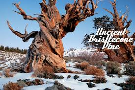 drop dead gorgeous trees photogallery times of india