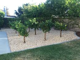 Backyard Vineyard Design by My Home Vineyard U2013 A Beautiful Custom Home Vineyard