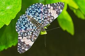 stratford upon avon butterfly farm a wonderful of an