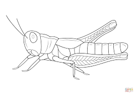 amazing free grasshoppers insect coloring books printable for kids