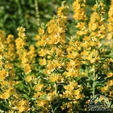 218 best gardens images on pinterest perennial garden plants