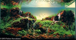 Aquascapes Com These Are Aquariums This Is The Art Of A Aquascaping Album On