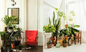 Home Decorating Plants Creative Scandinavian Home Interior Combined With Plants Decor