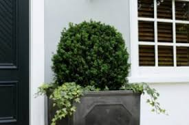23 boxwood planter box ideas traditional deck remodeling ideas
