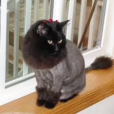 sandy u0027s professional dog u0026 cat grooming 16 reviews pet sitting