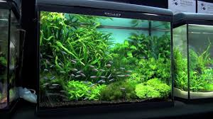 Aquascape Shop Aquascaping Aquarium Ideas From Petfair 2011 Part 3 Youtube