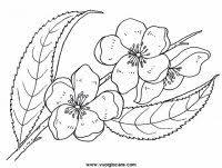 fiori disegni disegni da stare e da colorare natura il fiore i fiori