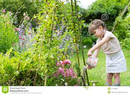 cute little watering flowers in garden stock photo image