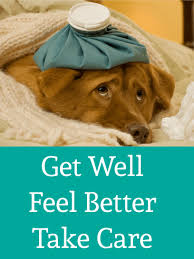 feel better cards feel better get well card birthday greeting cards by davia