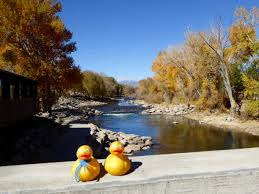 Arkansas travel chanel images Page 2 colorado traveling ducks jpg