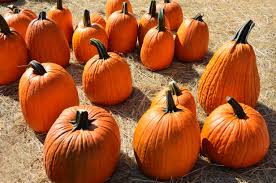 free images fall spooky celebration orange harvest produce