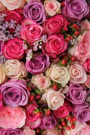 Flower Rose Best 25 Rose Wallpaper Ideas On Pinterest Screensaver Flower