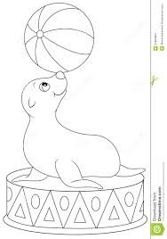 circus seal equilibrist stock images image 37666894