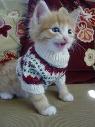 sweaters for cats cats in sweaters album on imgur