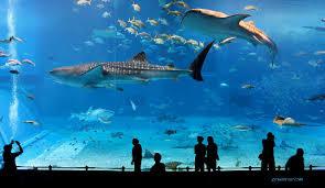 japanese aquarium kuroshio sea aquarium music video the inspiration room