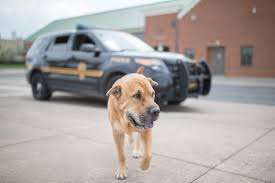 boxer dog on motorcycle doc broz police officer volunteer and pittie advocate voted