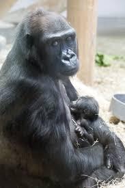 denver zoo zooborns