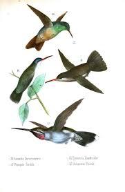 110 best humming bird images on pinterest humming birds retro