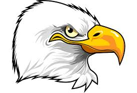 white tailed eagle clipart comic pencil and in color white