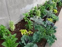 design a beautiful vegetable garden vegetable gardener