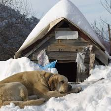 how to keep dog houses warm during winter paw castle