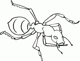 ant drawing for kids free printable ant coloring pages for kids