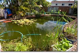 Is A Backyard Pond An Ecosystem Convert Your Eco Unfriendly Swimming Pool Into A Biologically
