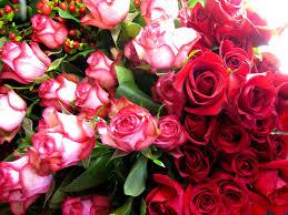 Multi Colored Roses Petals U0026 Paper Boutique Red Roses Pink Roses Multi Colored