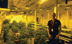 hvac u0027s growing role in the marijuana industry 2016 11 21 achrnews