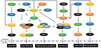 antibodies free full text epigenetic regulation of innate