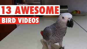funny thanksgiving dog pictures 13 funny bird videos youtube