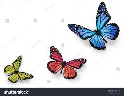 Blue And Green Butterfly - green pink blue butterflies isolated on stock photo 56343148
