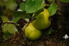 a winter garden gretchen m greer