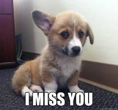 Miss You Meme - miss you corgi memes quickmeme