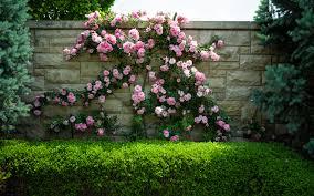 wall flowers wall flowers photos tierra este 60353