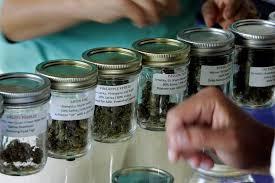 Weed Maps San Diego by San Diego Oks Two More Pot Dispensaries The San Diego Union Tribune