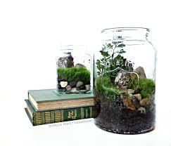 Home Decor Glass Desktop Canning Jar Terrarium Glass Planter U0026 Fern Moss
