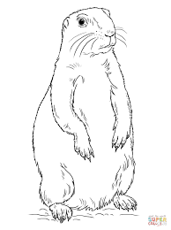 prairie dog standing coloring page free printable coloring pages