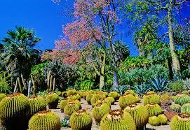 Botanical Gardens Huntington Photograph Of Huntington Gardens And Library In San Marino Ca