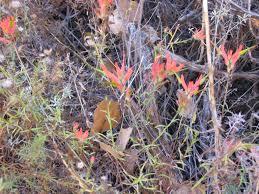 utah native plants november 12 2016 utah seed u0026 camping trip desert canyon farm