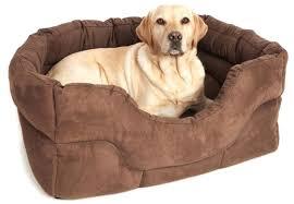 doggie beds dog bed doggie beds petsmart u2013 tipsdesainku club