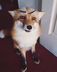 Meme Fox - create meme fox surprised fox surprised home fox home fox