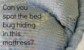 Bed Bugs On Mattress Better Bed Bugs Information Thrasher Termite U0026 Pest Control