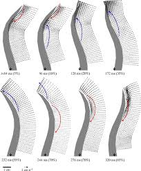 the hydrodynamics of eel swimming journal of experimental biology