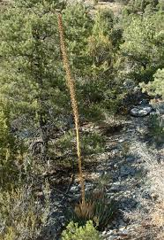 utah native plants uncategorized intermountain excursions blog page 18